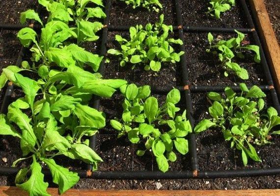 Garden Grid Garden Irrigation System