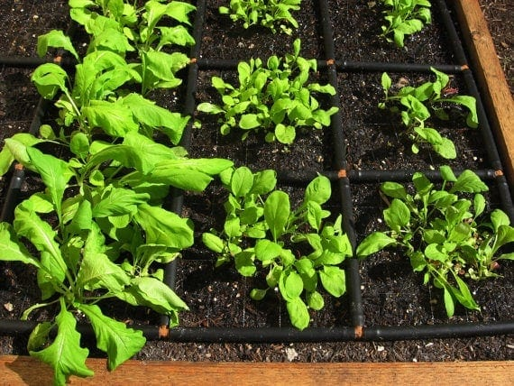 Based on the concept of square foot gardening, the Garden Grid lays out a grid pattern in your garden giving you a reference for plant spacing.