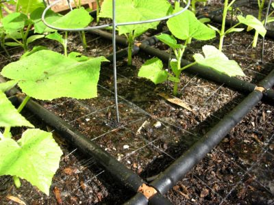 The Garden Grid is a square foot gardening grid and irrigation system, in one!