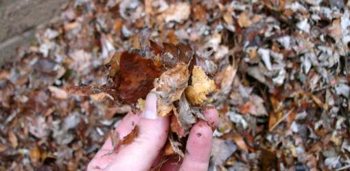 winterize garden beds with leaf mulch