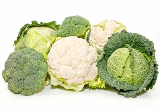 Brassicaceae_frost-tolerant-plants