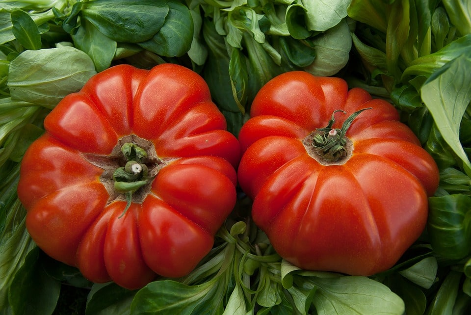 Summer Gardening Tips - A variety of heirloom and hybrid tomatoes excel in the heat