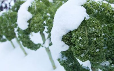 13 Frost Tolerant Plants to Grow when it's Cold