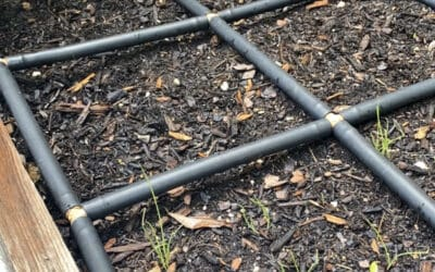 Growing Green Onions – Plant In Stages